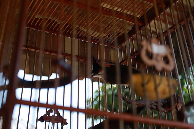 Конкурс певчих птиц