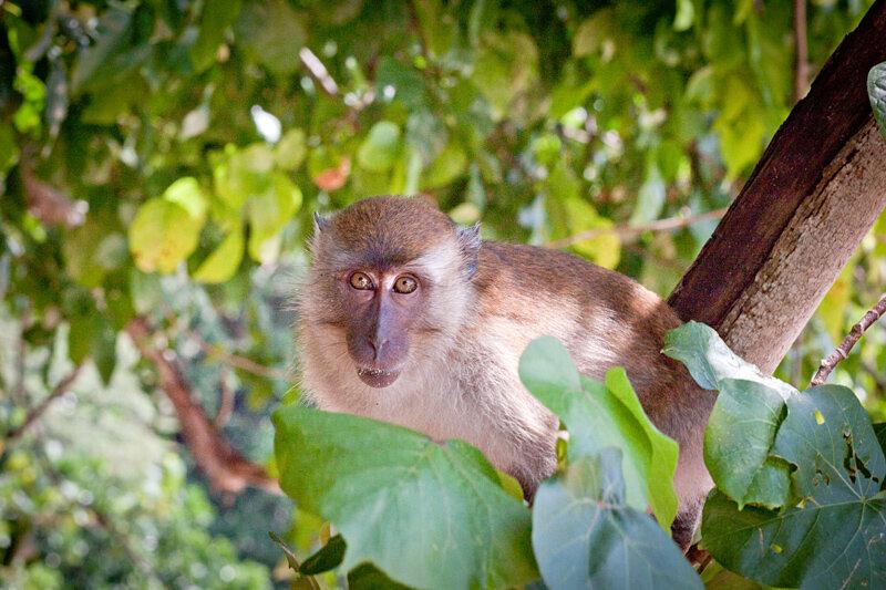 Шоу обезьян в Таиланде