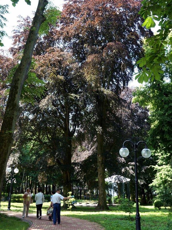 Парк-Янтарного