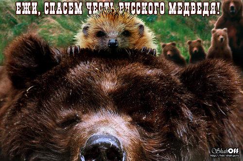 Ёжики и честь медведей.