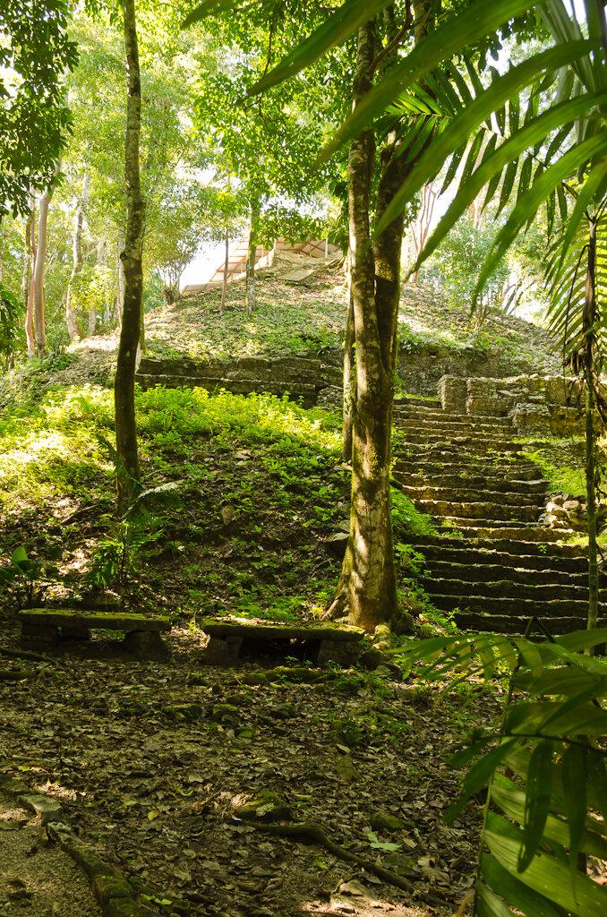 Старая пирамида майя в джунглях Palenque. Отзывы о поездке по Мексике дикарями