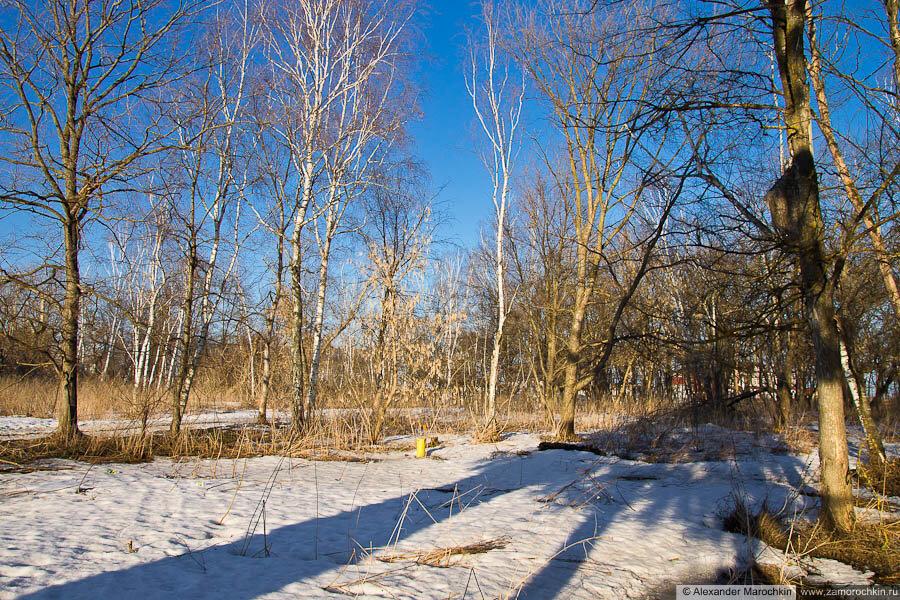 Деревья в краснослободском парке