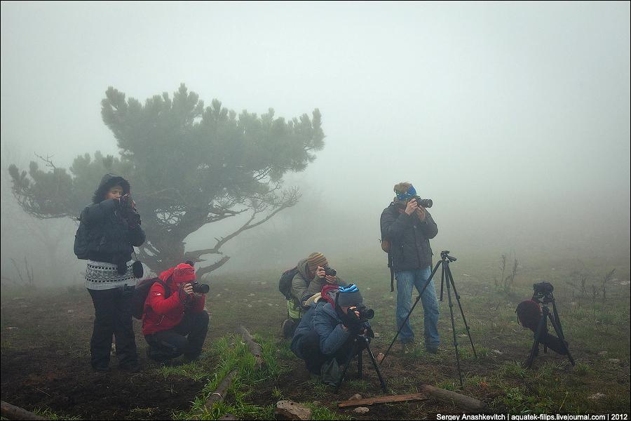 Фотографы в тумане