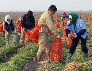 Китайцы заплатят крупный штраф за испорченные приморские земли