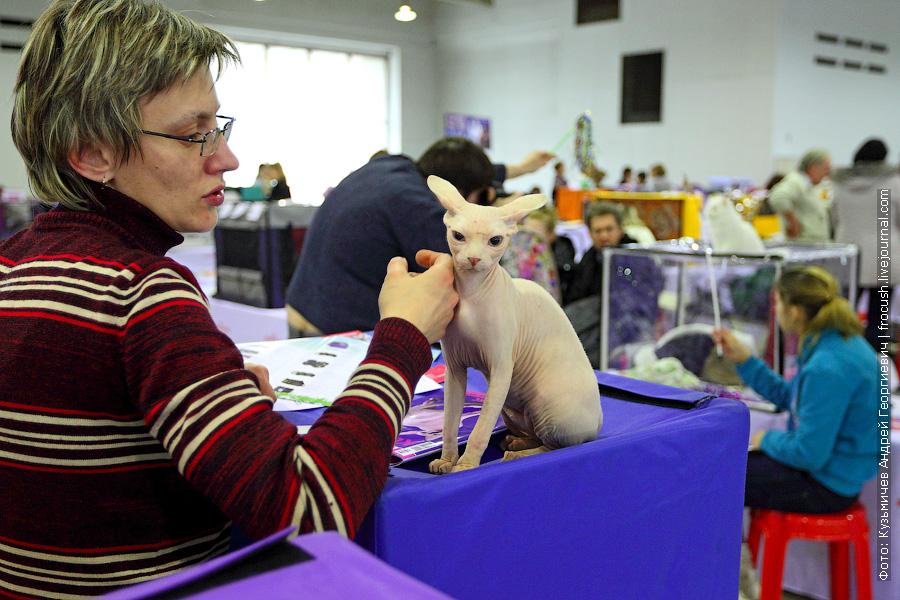 выставка кошек апрель 2013 Москва