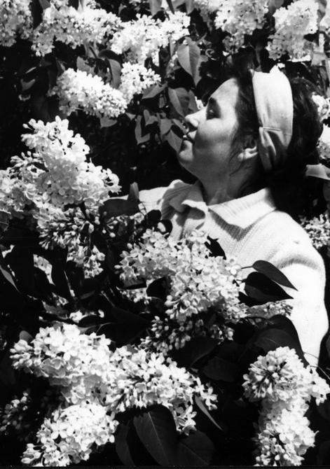 1964.05.29. Цветущая сирень в Ботаническом саду АН УССР