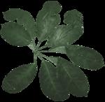 feli_l_foliage2.png