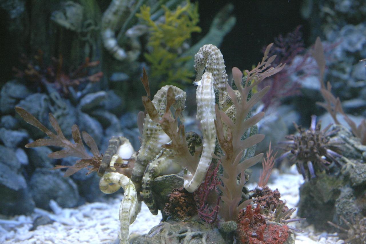 Oltremare - Hippocampus