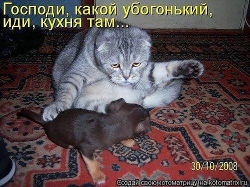 http://img-fotki.yandex.ru/get/4123/194408087.1/0_8de20_42ada914_L.jpg