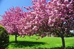 Spring (9).jpg