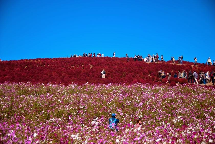 Живописный японский парк Хитати Кайхин 0 1422f3 d71a8fa5 orig