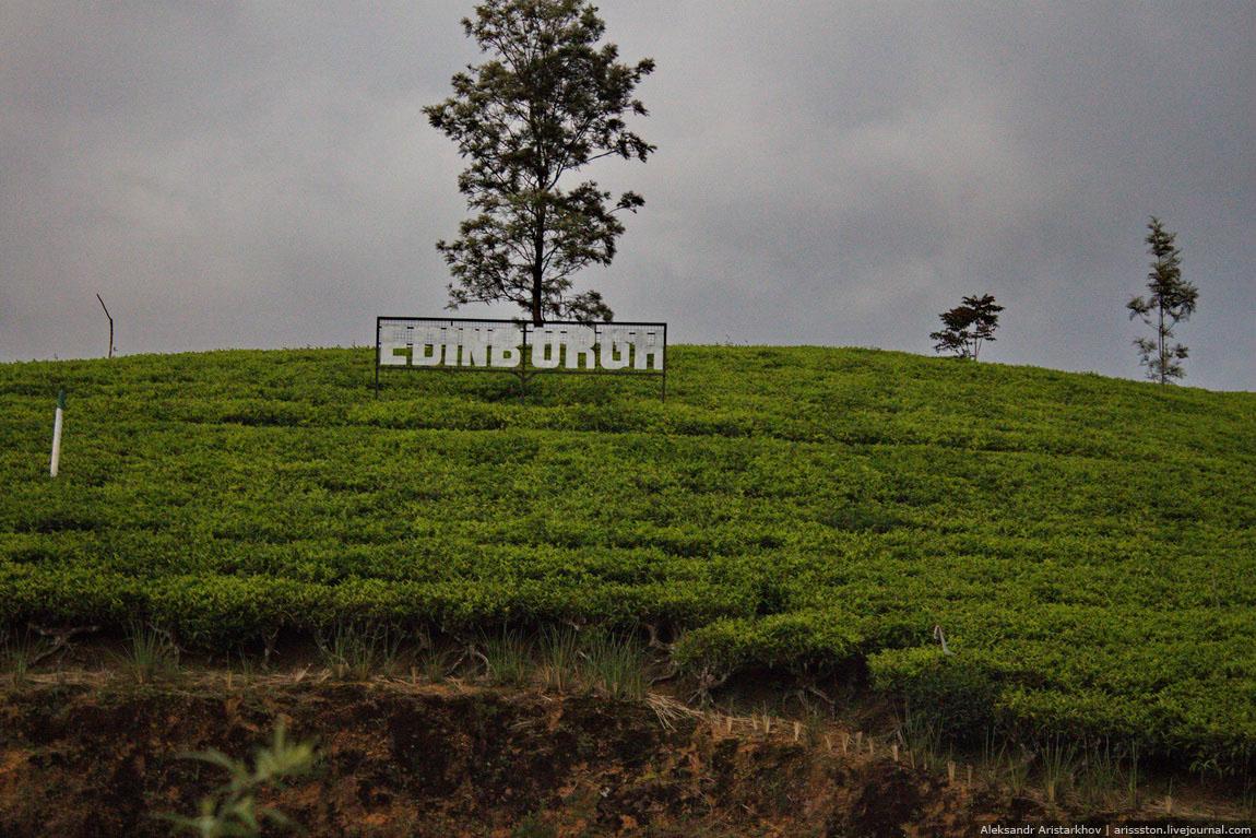 Шри-Ланка_Чайный замок_38