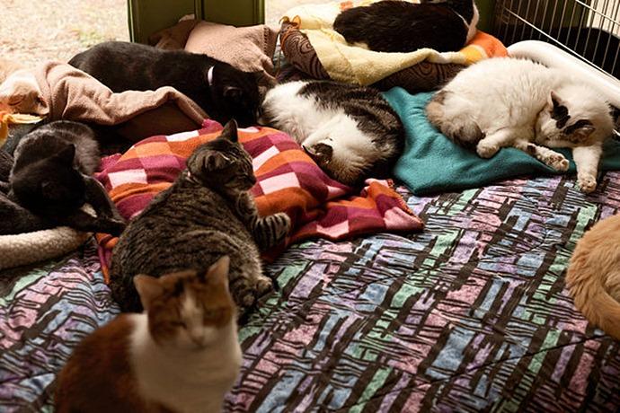 американка живет в доме с 300 кошками