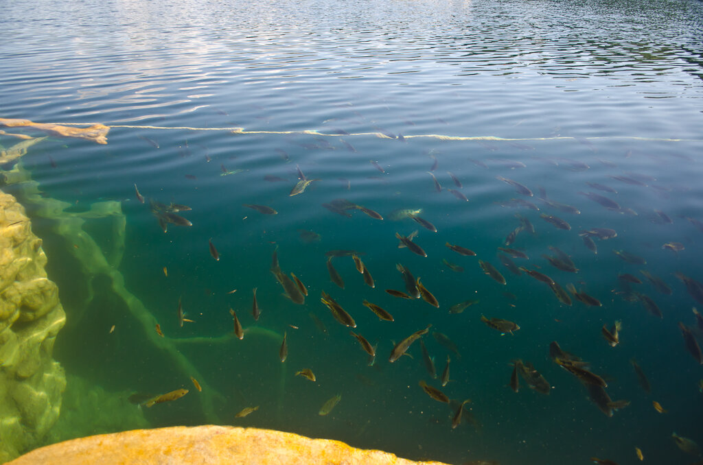Используя полярик мы убираем отражения с поверхности воды сенота Асуль. Две фотографии сняты на Nikon D5100 KIT 18-55