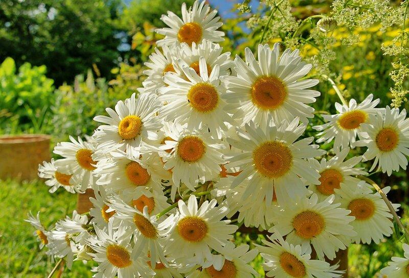 открытки цветы к дню семьи одну пожилую мадам