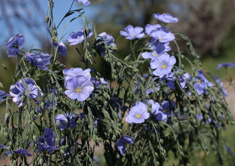 Знаю любишь все оттенки голубых цветов