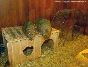 Контактный зоопарк в Солнцево