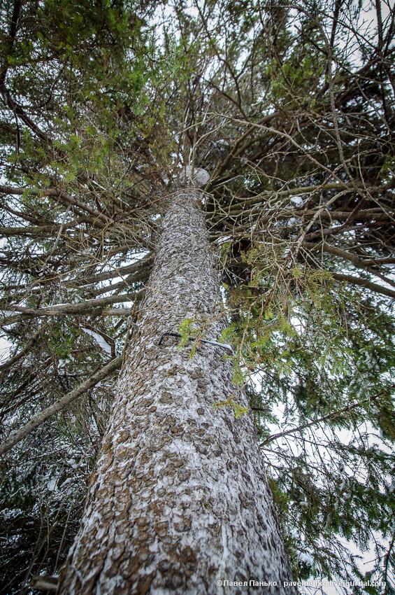 усадьба Брянчаниновых дерево PavelPanko