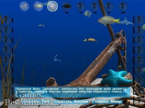 Большой барьерный риф 2 цепная