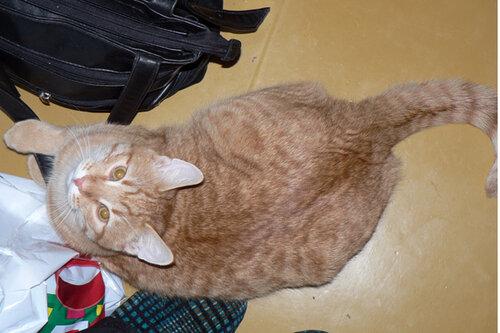 в гостях кот вид сверху