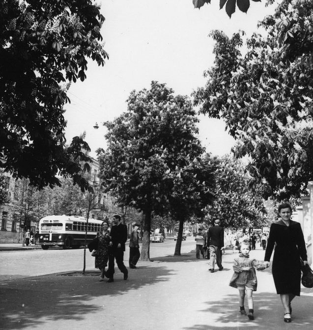 1956.05.24. Цветущие каштаны на улице Симона Петлюры (бывшая улица Коминтерна). Фото: Примаченко А.