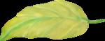 NLD Leaf (3).png