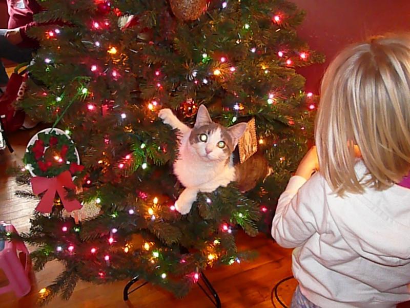 Коты на ёлке - фото 11
