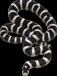 змеи  (11).png