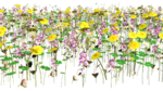 Lug_Grass_Flower (22).png