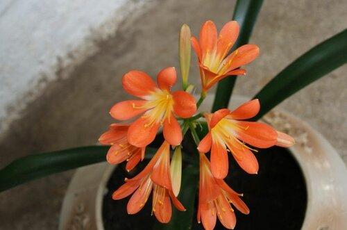 Красивые цветы в ботаническом саду (02.04.2013)
