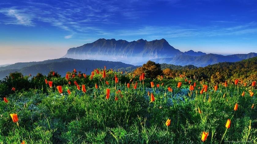 Цветы Таиланда 0 141ada b4017d77 orig