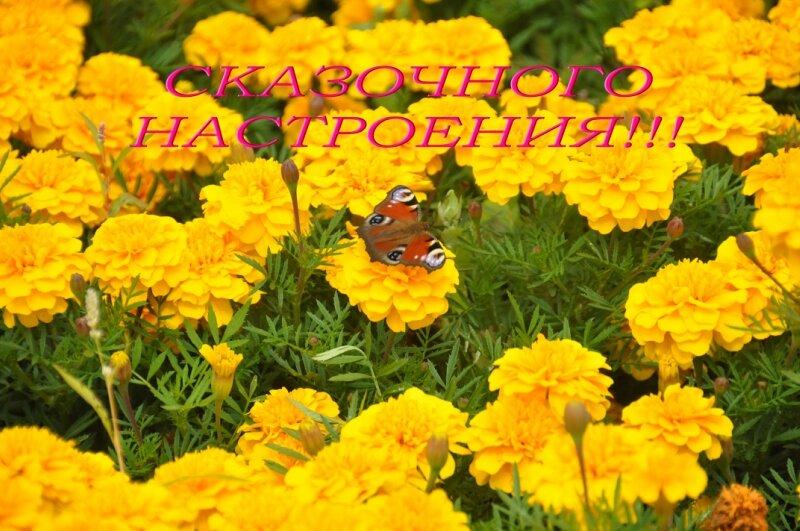 http://img-fotki.yandex.ru/get/4124/25708572.80/0_9268f_1ec1d91f_XL.jpg