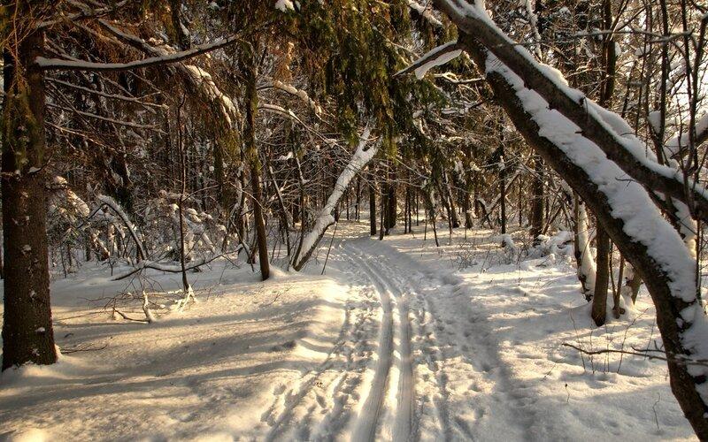 Кикиморская лыжная под коосыми лучами солнца