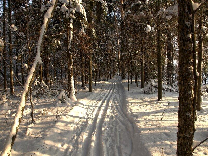 Кикиморская лыжня