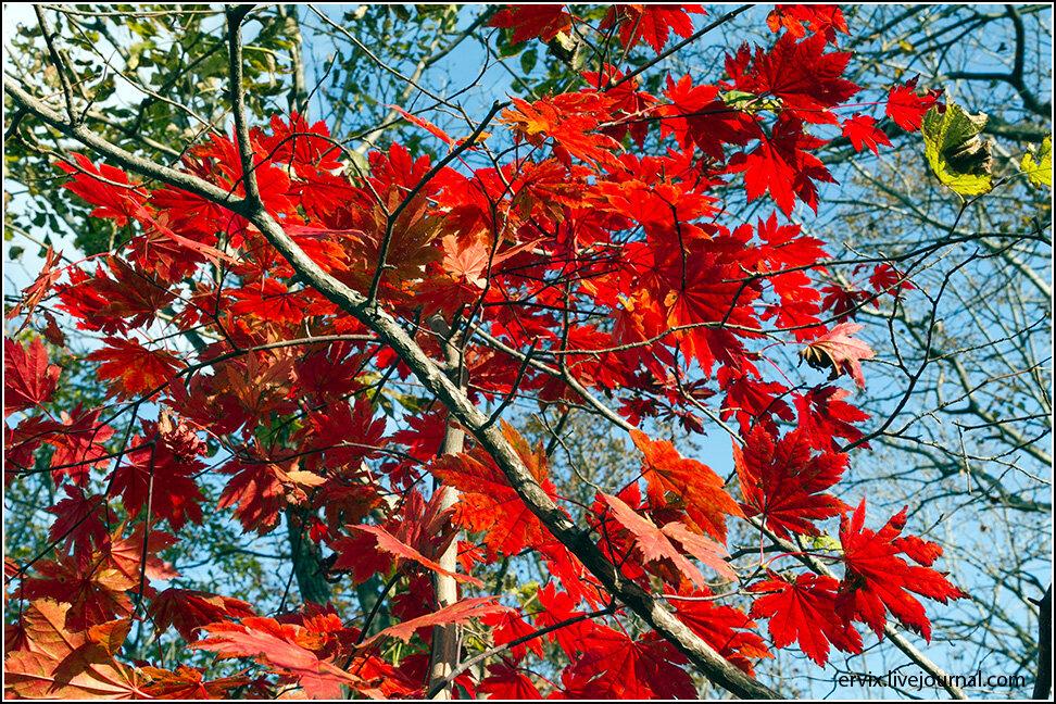 Ну как удержаться и не сфотографировать осеннюю листву?