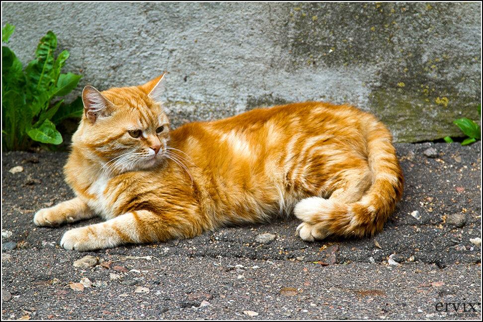 Рядом с монастырем обитает большая колония бездомных котов, предводитель которой - огненно-рыжий самец по кличке Чубайс. Подобно своему тезке, он в течение 10-15 минут пересматривал результаты приватизации каких-то объедков одновременно с 3-4 своими соплеменниками, угрожающе крутя хвостом.