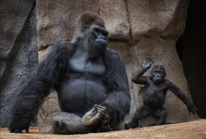 Фотографии животных вызывающие
