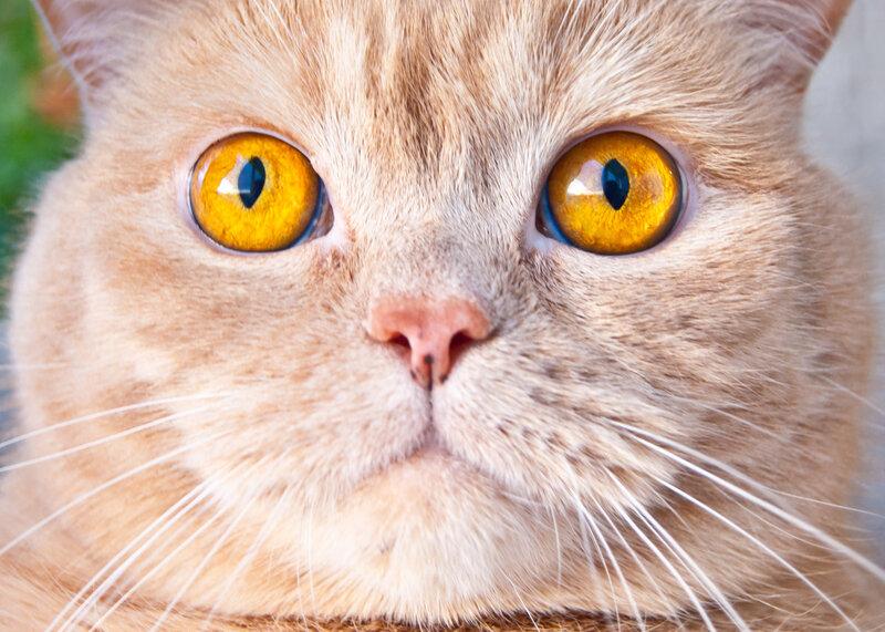 Глаза велики