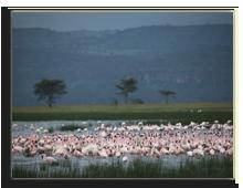 Кения. Озеро Накуру. Фото А. Синицына