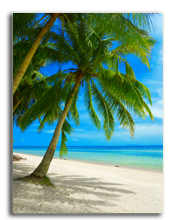 Французская Полинезия. Beautiful tropical beach with palmtrees. Фото efired - Depositphotos