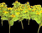 Lug_Grass_Flower (13).png