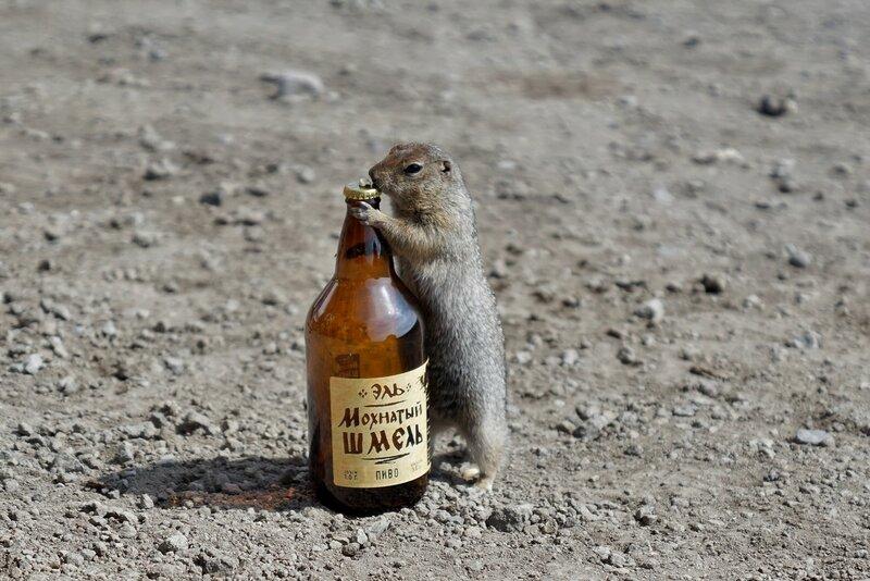 Пятница без пива – уикенд пропал!