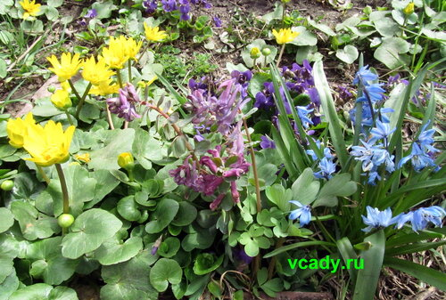 Садовые первоцветы