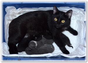 Наоми с котятами.jpg
