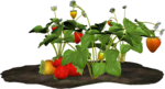 DBA STRAWBERRY PLANT 3.png