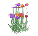 Daisies-1-Belles-Graphics.png