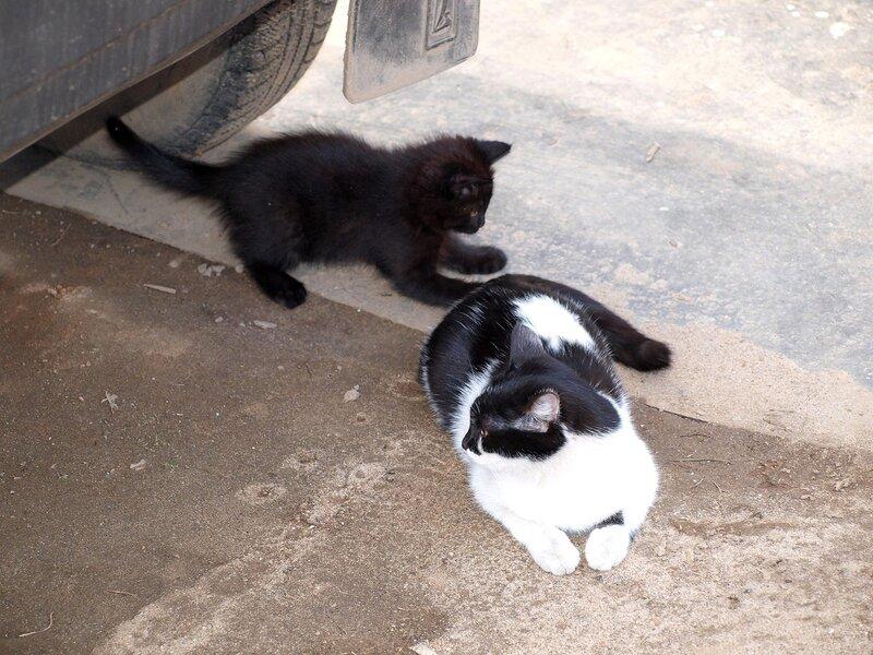Кошки и котята спасателей P4281369.jpg