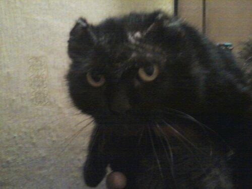 Камышин (Волг. О). Томас - жертва садистов… Помогите спасти котика!…