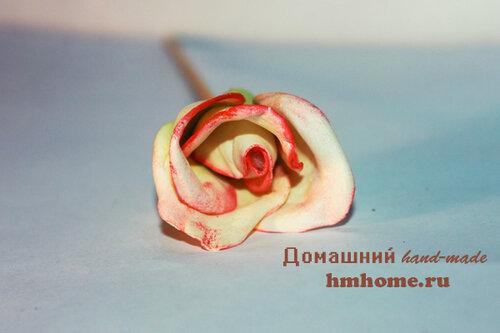 Роза Глория на гребне