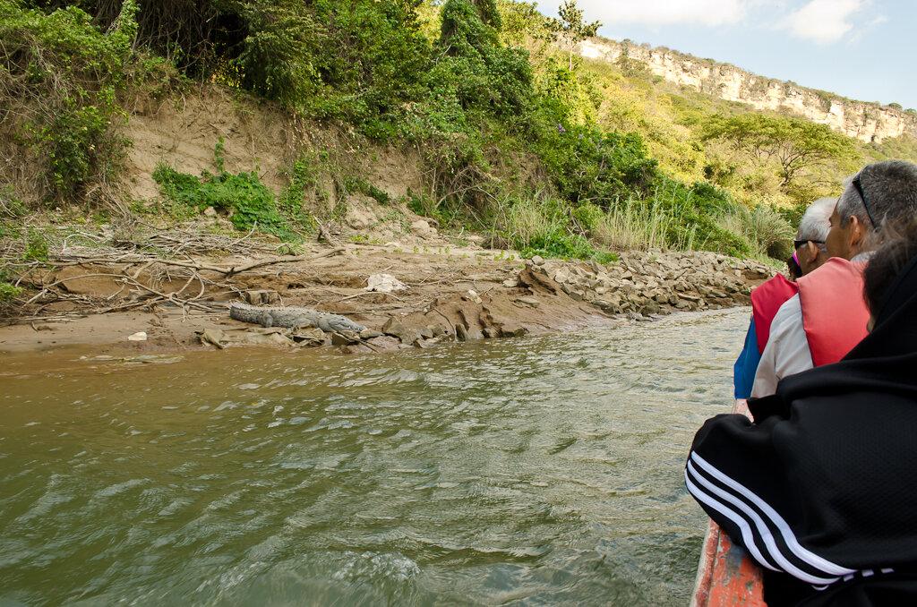 Фотоохота на крокодилов во время самостоятельного путешествия по Мексике за рулем арендованной машины. Снято на Nikon D5100 и штатный объектив Nikon 18-55